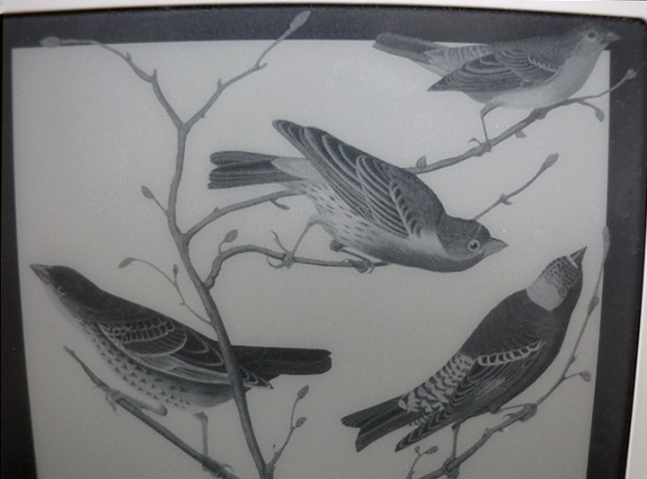 Close-up of Kindle 2's birds