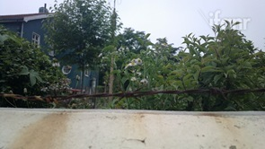 Flowers behind wires Nokia 808