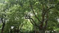 Trees Nokia 808