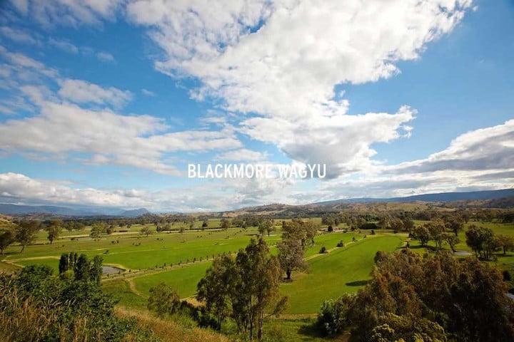 blackmore-wagyu-farm
