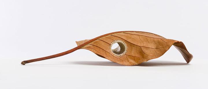 crocheted-leaf-art-susanna-bauer-1