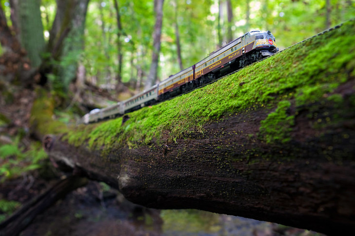 canadian-train-quebec-forest__880
