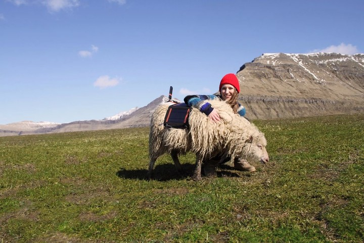 wewantgooglestreetview-sheep-view-360-faroe-islands-4