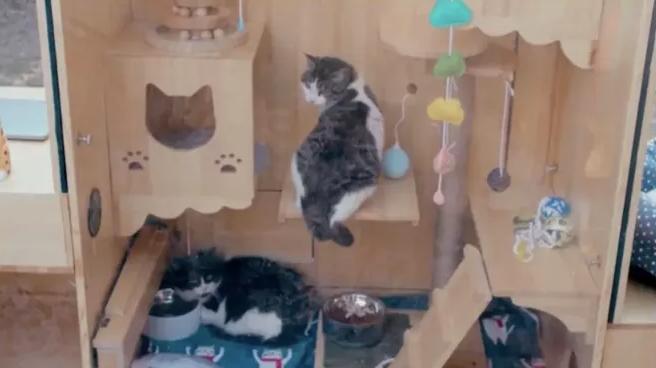 百度工程师为流浪猫打造智能庇护所