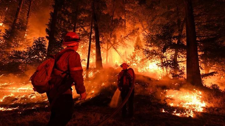 用ai 对抗森林火灾,消防员未来或许会更加安全了图片