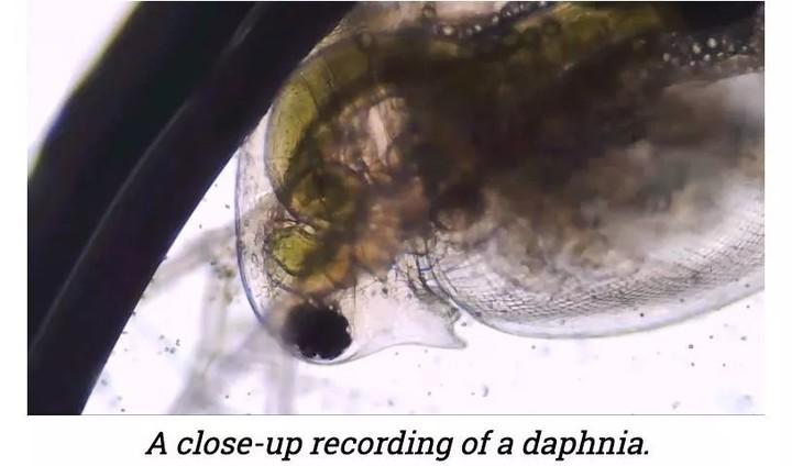 """把阳光""""变成""""好吃的鱼?!硅谷的神奇生物技术+AI"""