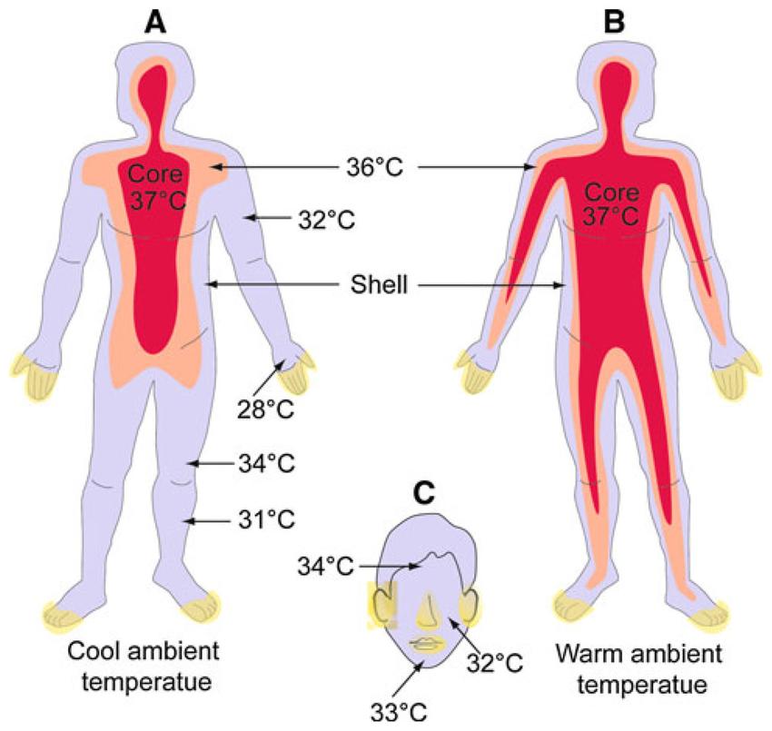 37 度 体温 生理 较真丨人体正常体温37度已成历史是真的吗?体温普遍降低意味着什么?_腾讯新闻